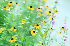 野に咲く花のように