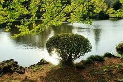 この木なんの木ちっちゃな木