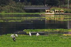 江津湖にて