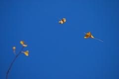 銀杏鶴、2羽。