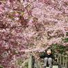 桜の中で風になる
