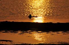 浦島伝説の浜