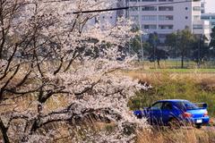 インプ&桜