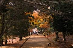 東大寺付近