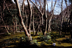 祇王寺の木々