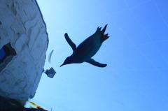 ペンギンが空を飛ぶ。