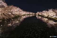 桜は夜①(弘前公園)