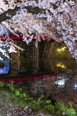桜は夜④(弘前公園)