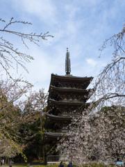 京の桜 2021 醍醐寺①