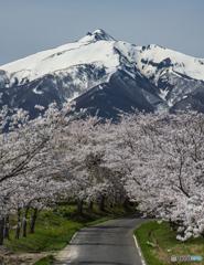 岩木山と桜並木