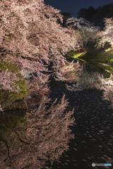 桜は夜③(弘前公園)