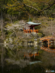京の桜 2021 醍醐寺②