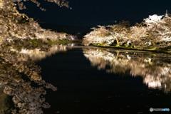 東北桜 2021 弘前公園 夜 ⑤