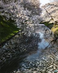 花筏②(弘前公園)