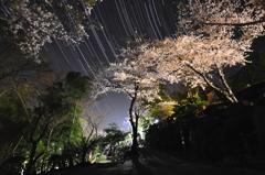 夜桜と獅子座