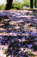 春の残り香