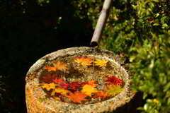 水たまりと紅葉