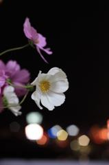 夜に咲く花