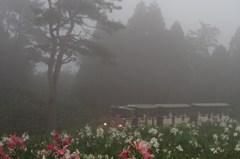 霧の中を・・・!