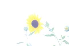 夏の日の夢