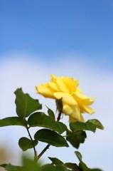 幸せの黄色い○○