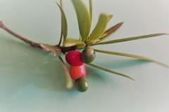可愛い木の実