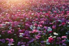 煌めく花たち