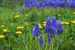 春が来た、野にも来た