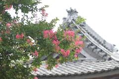 百日紅の咲くころ