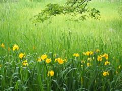初夏の緑と