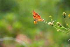 蝶さんたちの休日①