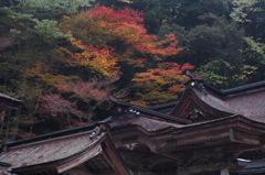 大矢田神社②