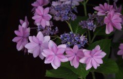 乙女の花冠