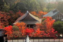 秋色の染まる境内