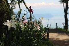 琵琶湖の見えるゆり園
