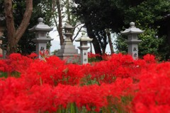小さな神社の参道