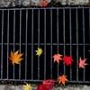 落ち葉のリズム