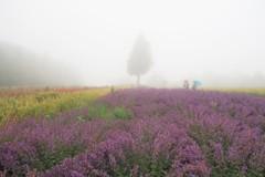 霧中のお花畑