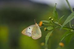 蝶さんたちの休日②