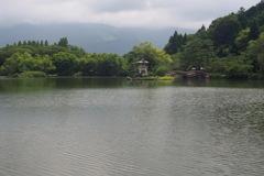 水鳥が消えた池
