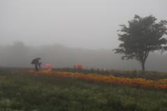 霧雨の高原