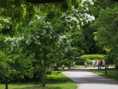 新緑の植物園