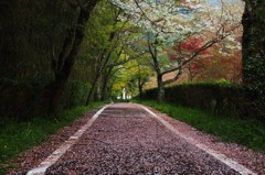 わぁ~桜…道