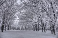 『与野公園 雪景色①』