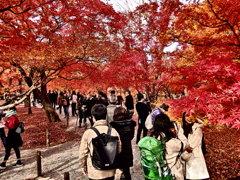 『東福寺』