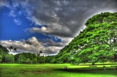 『Moanalua Gardens』