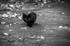 『大宮公園 黒猫』