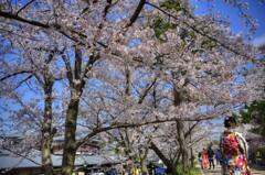 『高台寺公園』