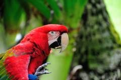 『Parrot』
