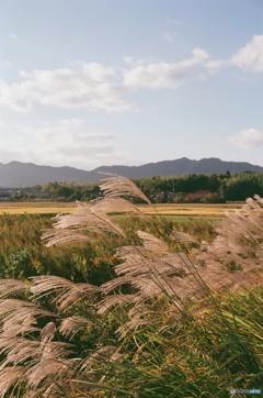 東広島の秋